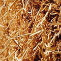 Up for the challenges of cellulosic ethanol production