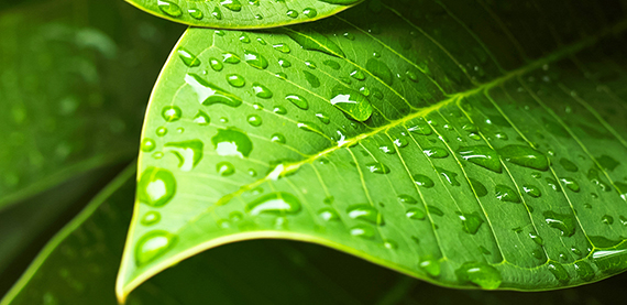 /globalassets/sustainability/images/shutterstock_137123537_green-leaf_570.jpg
